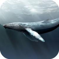 Guess for Aquatic Species at Risk Quiz Game