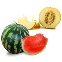 Watermelon/Melon