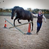 Horse Training Techniques