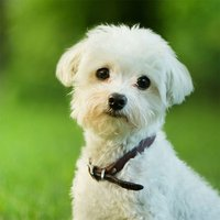 Dog Wallpapers & Pictures – Cute Dogs