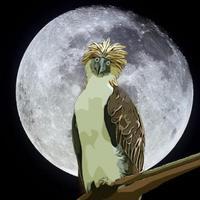 Eagle Jeffery