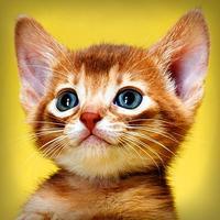 Pet Photography – Pet Pictures & Pet Backgrounds