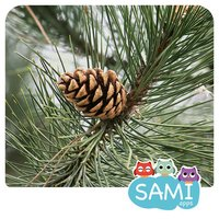 Sami Tiny FlashCards forest adventures kids apps