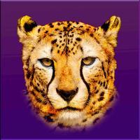 Cheetahs Las Vegas