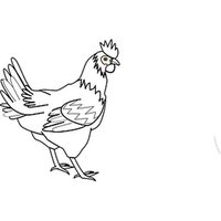 Roosters Two Sticker Pack