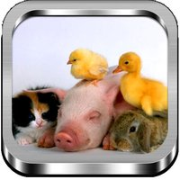 Jigsaw Puzzle Baby Animals