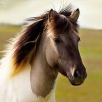 Horse Soundboard