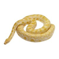 Snakes Stickers