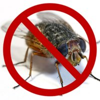 Ultrasound House Fly Repellent
