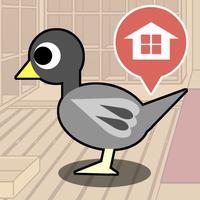 Race Pigeon