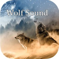 Wolf Sounds - Gray wolf Sounds