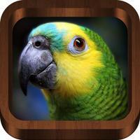 Bird Songs - Bird Call & Guide