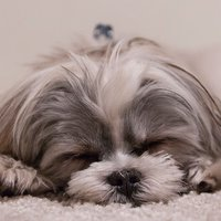 Dog Breeds: Dogs barking sounds, identification, whisperer, emotional