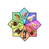 Animal Pinwheel Fun