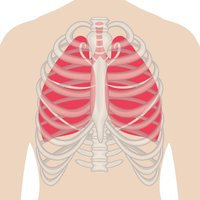 e-Anatomy V2