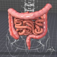 Body Parts : Small and Large Intestines Quiz