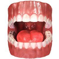 Virtual Reality(VR) Teeth Anatomy