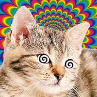 Cat Hypnosis Simulator
