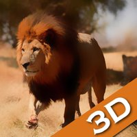 Lion Attack : Lion Rage Simulator