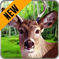 Animals Hunting Play : Hunting Simulation Game