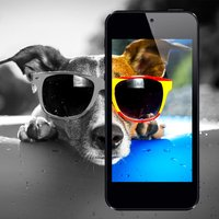Dog Wallpapers & Backgrounds HD Free