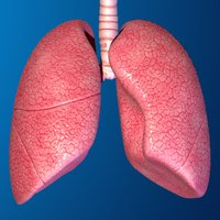 Human Body Parts : Lungs Quiz