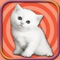 Adorable Kitten Run – Pet Simulation game 2017