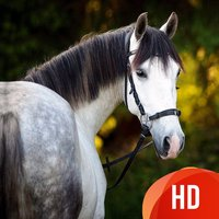 Beautiful HD Horse Wallpapers