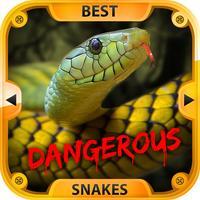 The Best Dangerous Snakes