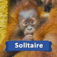 Solitaire Baby Animals