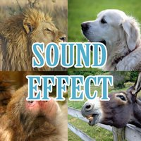 Animal sound effects (mammals crying)