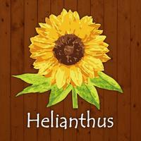 トータルボディケアサロンHelianthus