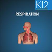 Cellular Respiration Process