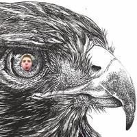 HawkSounds