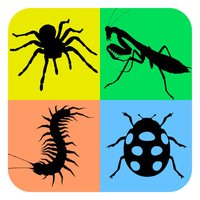 Insects Arachnids Life Cycle