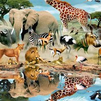 HD Wild Animal Wallpapers