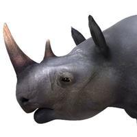 Virtual Reality(VR) Rhino
