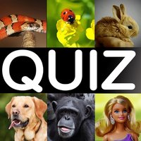 What is it? the funny picture quiz game!