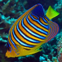 Marine Fish Bible+