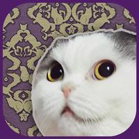 猫託〜猫からのメッセージ〜