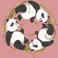 Panda HD Wallpapers and Backgrounds