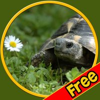 kids turtles lovers - free
