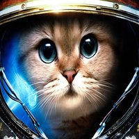 Cats in the Space