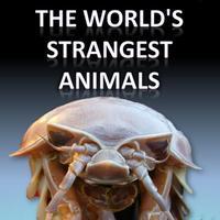 The World's Strangest Animals