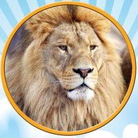 jungle pictures to win for kids - free game