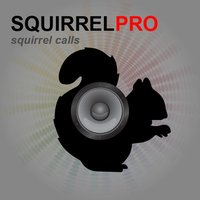 REAL Squirrel Calls and Squirrel Sounds for Hunting!