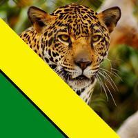 Los Leopardos - Atlético Bucaramanga Colombia