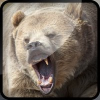 Grizzly Bear Hunt-ing Bullet Juggle Game