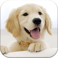 Dog Pairs - Play match puppies and baby dogs!
