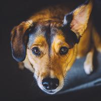 Dog Whistle & Training - Free Sound Trainer App